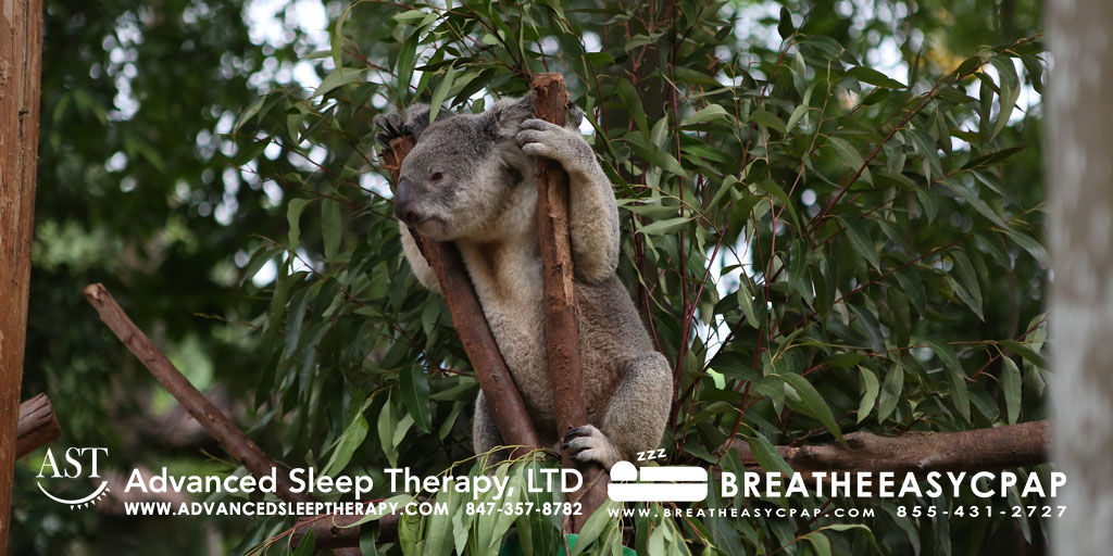 Eucalyptus for great relief with congestion